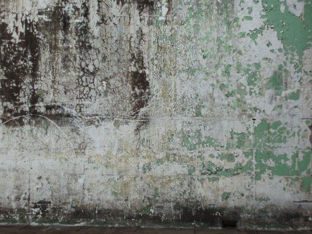 White Wall Paint Treatment
