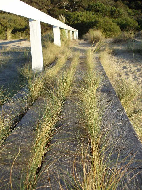 boardwalk grass | Free backgrounds and textures | Cr103.com