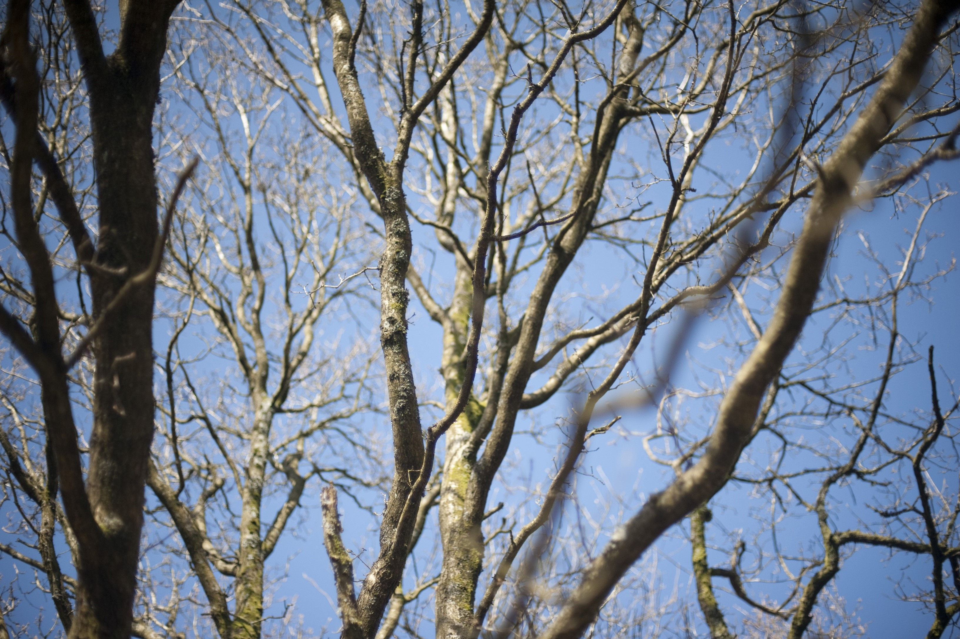 bare branches of a majestic tree