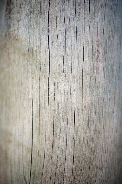 Dried cracked wood   Free backgrounds and textures   Cr103.com